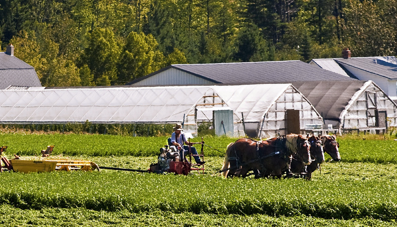 Amish Horse-drawn Tractor