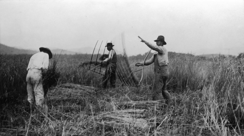 Men Cutting Wheat with a Cradle and Binding It by Hand, 1919