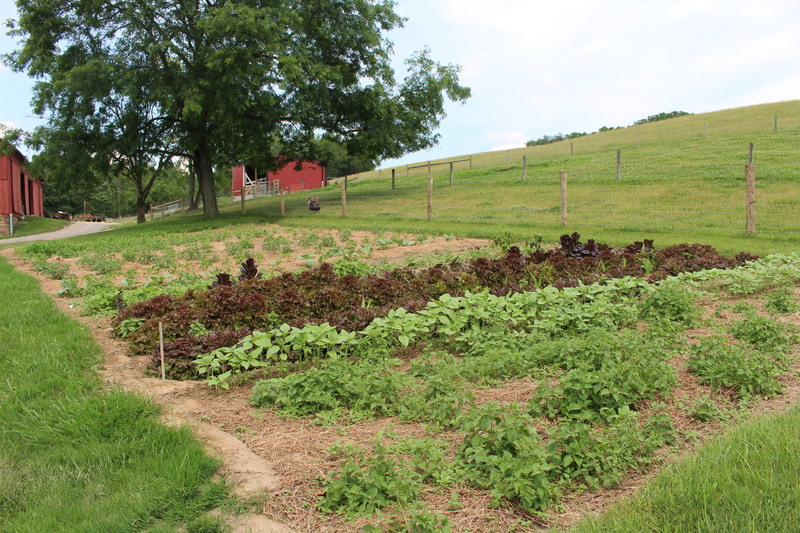 Amish Vegetable Patch