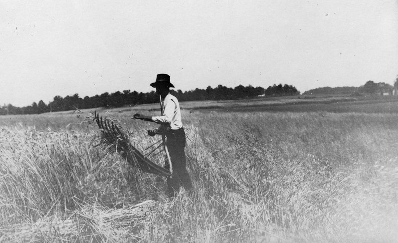 Man Cutting Wheat with a Cradle, 1919