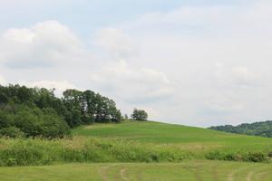 Amish Corn and Hay Field